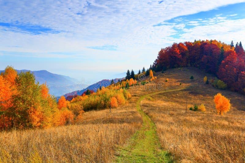 Die breite Spur führt zu den schönen goldenen Wald stockfoto
