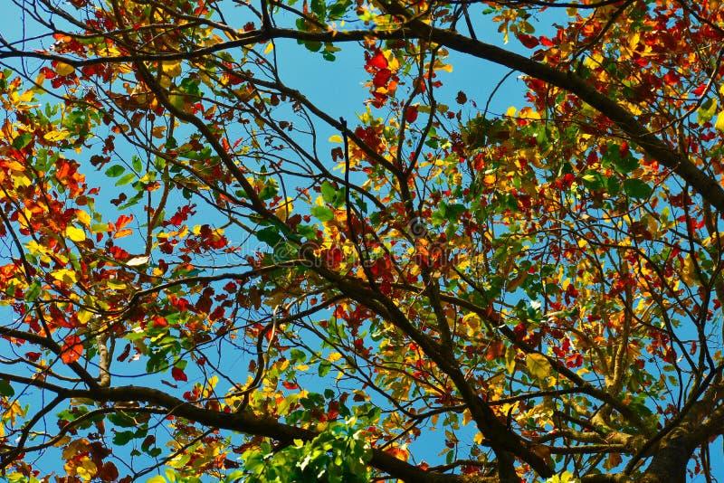 Die bunten Brunchs eines Baums anlässlich des Frühlinges Schaffung eines schönen Hintergrundes lizenzfreies stockfoto