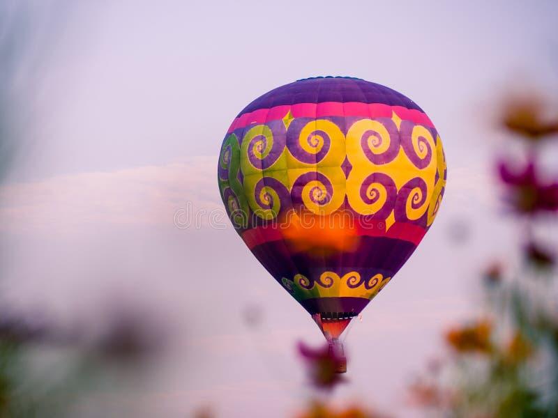 Die bunten Heißluftballone, die über Kosmos fliegen, blüht bei Sonnenuntergang lizenzfreie stockfotos