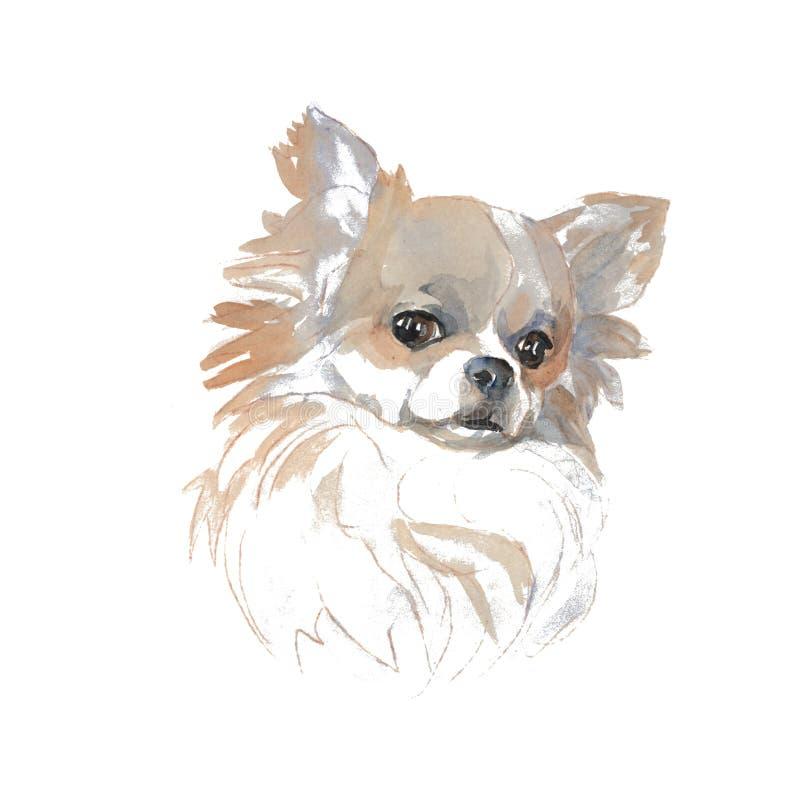 Die Chihuahua stock abbildung