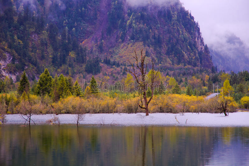 Die colorized Waldung und die Seen stockfotos