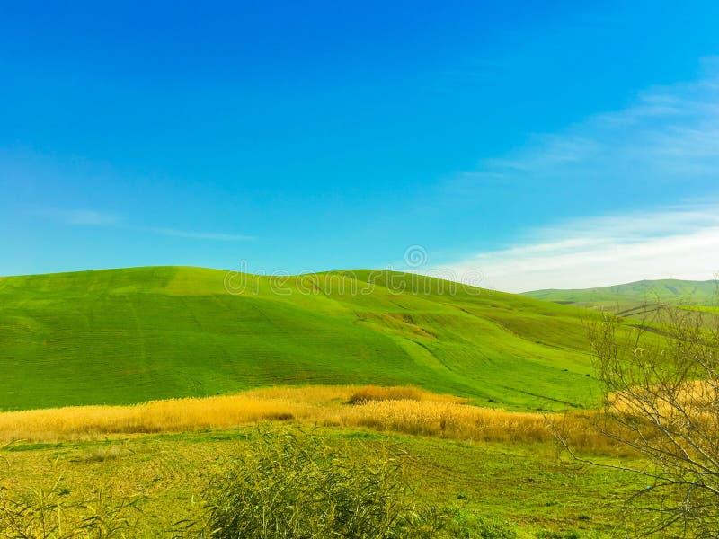 Die Dünen des Grüns stockfotografie