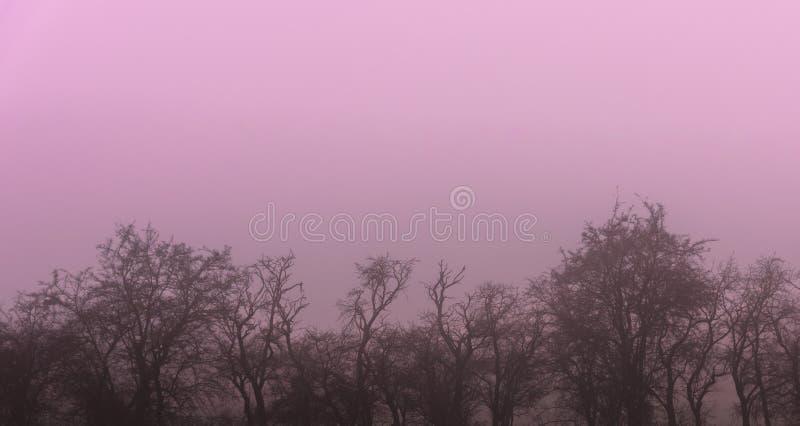 Die düstere Baumreihe mit rosa Nebel lizenzfreie stockfotografie