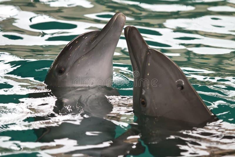 Die Delphine lizenzfreies stockbild