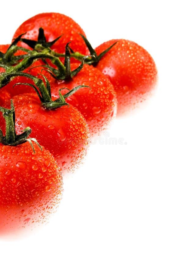 Die Dewy Tomate lizenzfreie stockfotos