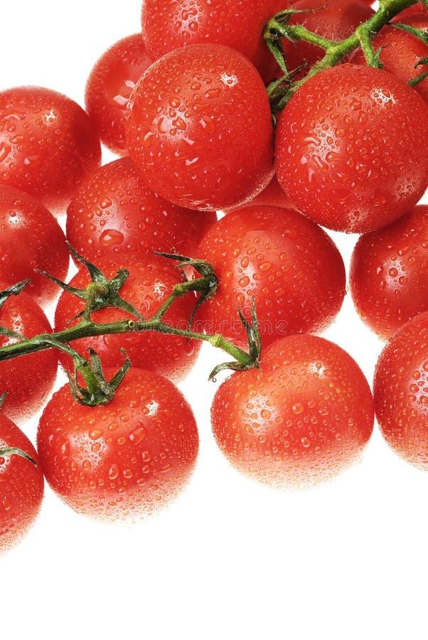 Die Dewy Tomate lizenzfreies stockfoto