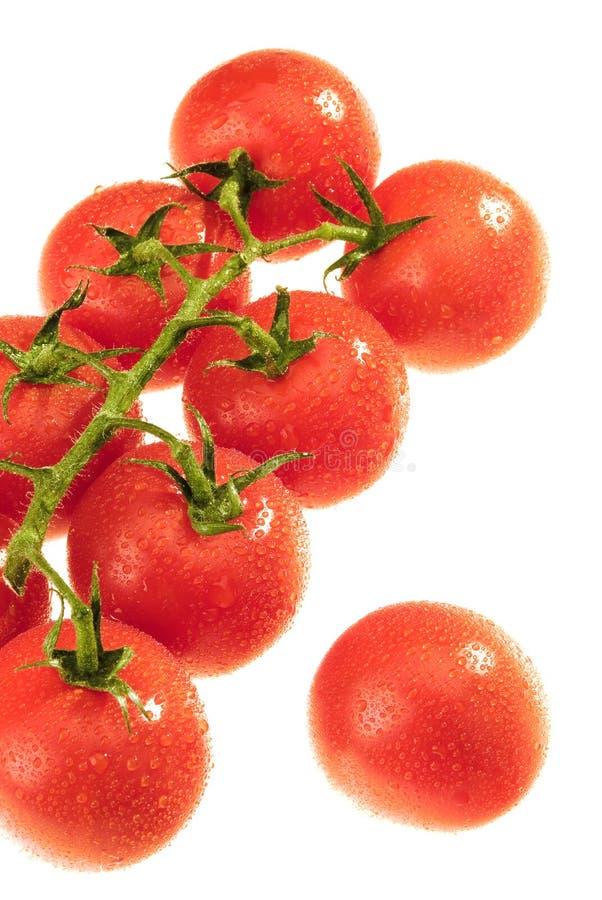 Die Dewy Tomate stockbild