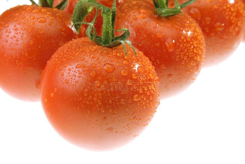 Die Dewy Tomate stockfotografie