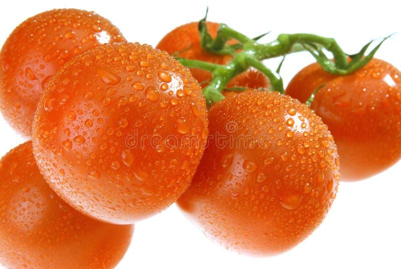 Die Dewy Tomate lizenzfreie stockbilder