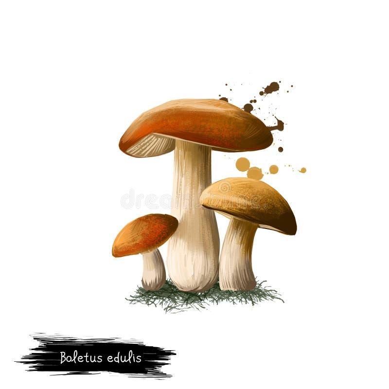 Die Digital-Kunstillustration von Boletus essbar, Herrenpilz, Porcini lokalisierte auf weißem Hintergrund Organisches gesundes Le stock abbildung