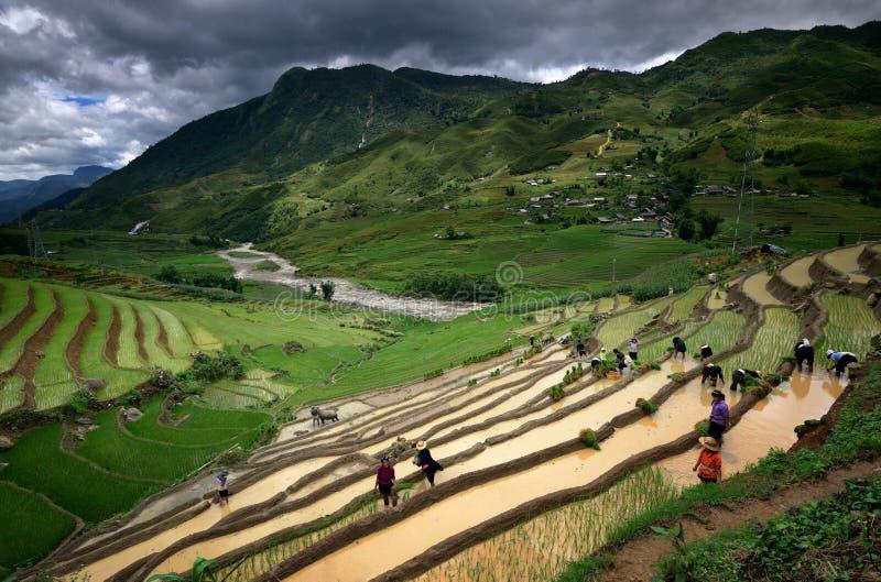 Download Die Dorfbewohner, Die In Den Reisterrassen Arbeiten, Nähern Sich Sapa Redaktionelles Stockbild - Bild von land, hütte: 27734399