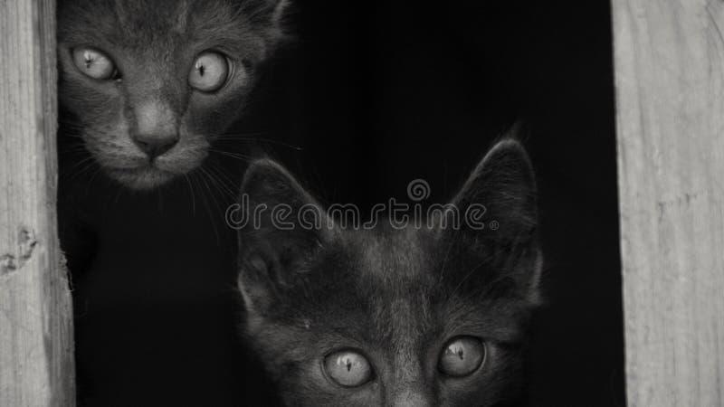 Die Dunkelheit von Katzen stockbilder