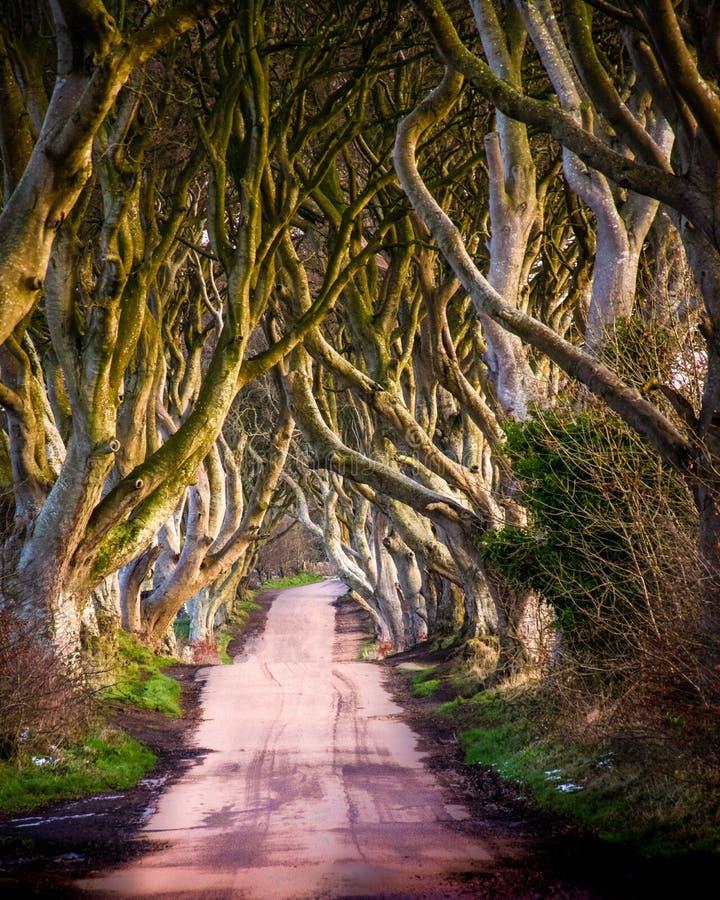 Die Dunkelheits-Hecken in Nordirland lizenzfreie stockfotografie