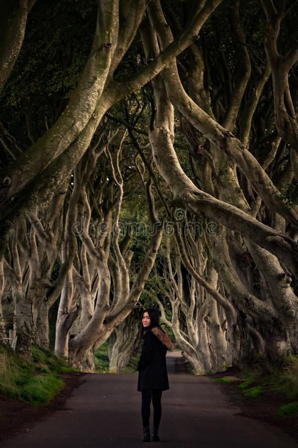 Die dunklen Hecken, Nordirland stockbilder