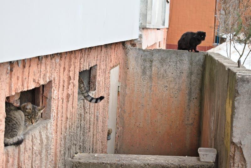 Die Ecke der Katze in der Winterstadt lizenzfreie stockfotos