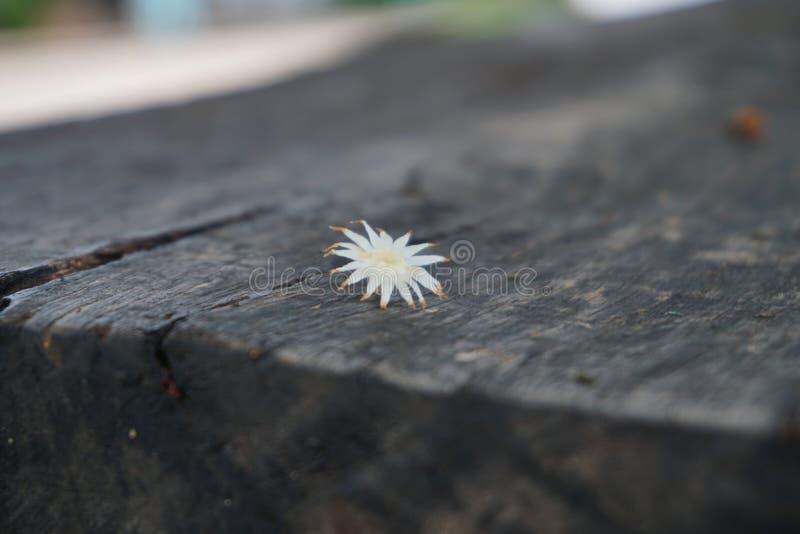 Die einzige Blume auf dem einsamen stockfotografie