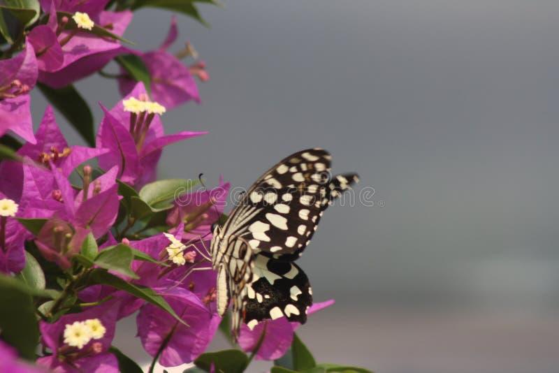 Die endlose Befugnis des Gottes in der Schaffung des Schmetterlinges beflügelt lizenzfreies stockbild