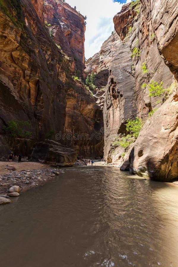 Die Engen in Zion National Park, Utah, USA stockfotografie