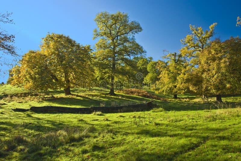 Die englischen Bäume stockfotografie
