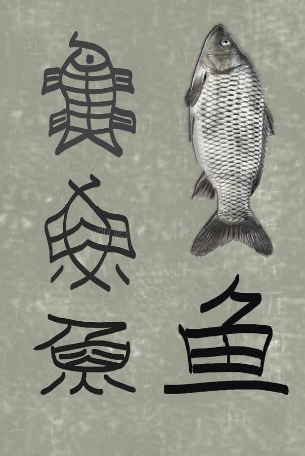 Die Entwicklung von chinesisches Schriftzeichen Fischen lizenzfreie stockbilder
