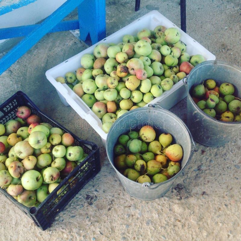 Die Ernte von Birnen und von Äpfeln stockbilder
