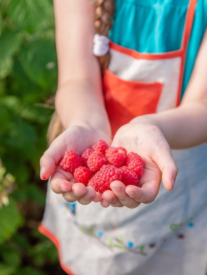 Die Erntehimbeeren der Kinder Ein nettes kleines Mädchen sammelt frische Früchte auf einem organischen Himbeerbauernhof Im Garten lizenzfreies stockfoto