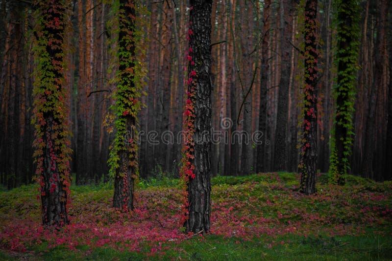 Die ersten Blätter im Wald lizenzfreie stockbilder