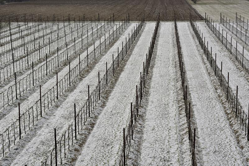 Die ersten Fröste auf den Trevigiano-Weinbergen in der Provinz von Conegliano lizenzfreie stockbilder