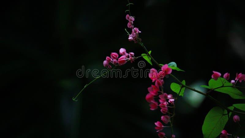 Die Farbe der Blumen passt mit dem dunklen Hintergrund auf lizenzfreies stockfoto