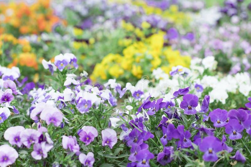 Die Farbe des Frühlinges lizenzfreie stockbilder