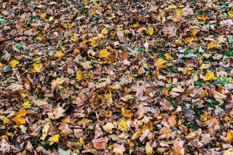 Die Farbe des Herbstblattes ist in verschiedenen Rot-, Gelb-, Violett-, Schwarz-, Blau-, Orange-, Magenta- und Brauntönen gehalte stockfotografie