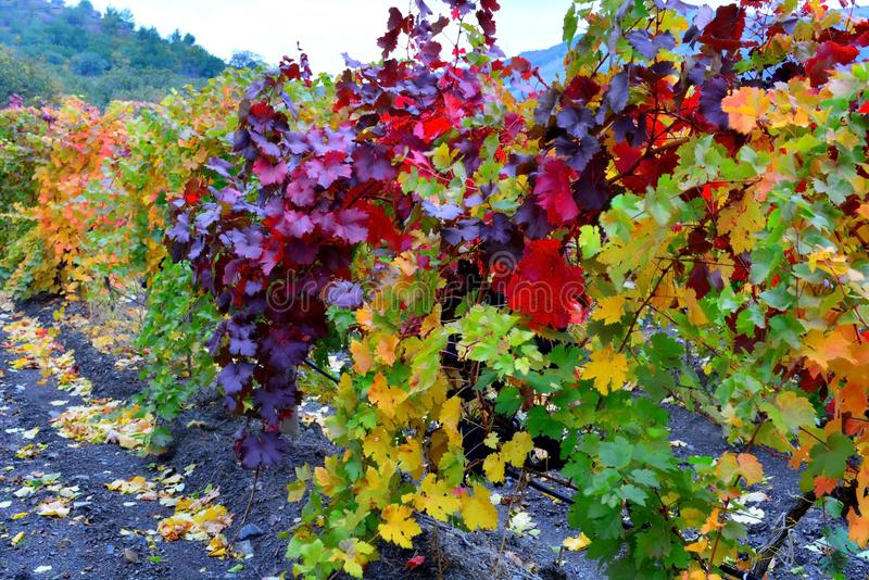 Die Farben des Herbstes lizenzfreie stockfotos