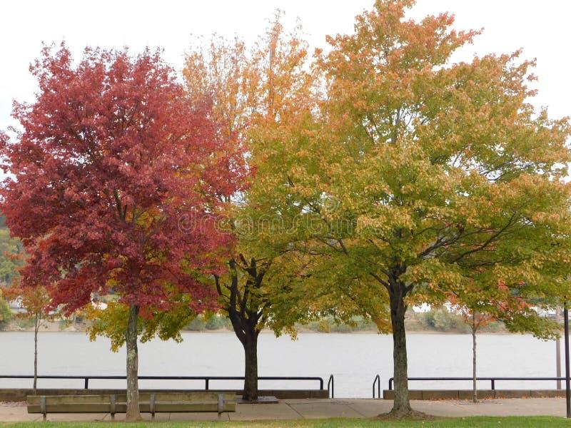 Die Farben des Herbstes lizenzfreies stockbild