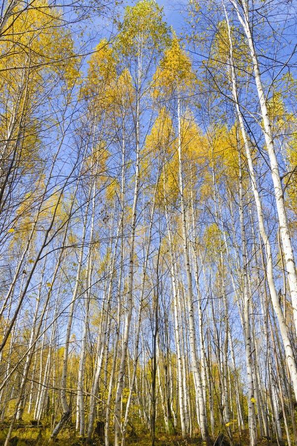 Die Farben des Herbstes stockfotos