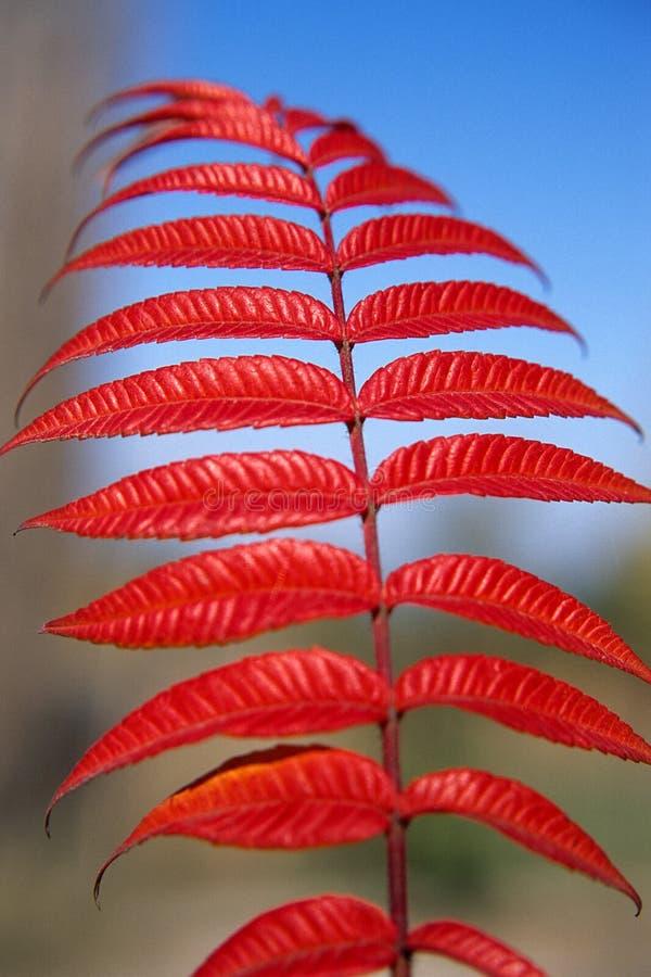 Die Farben Des Herbstes Stockbilder