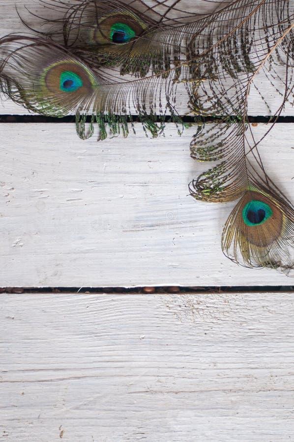 Die Federn, schön, Pfau, Pfau versieht, Hintergrund, weißer Hintergrund, hölzerner Hintergrund mit Federn lizenzfreie stockfotografie