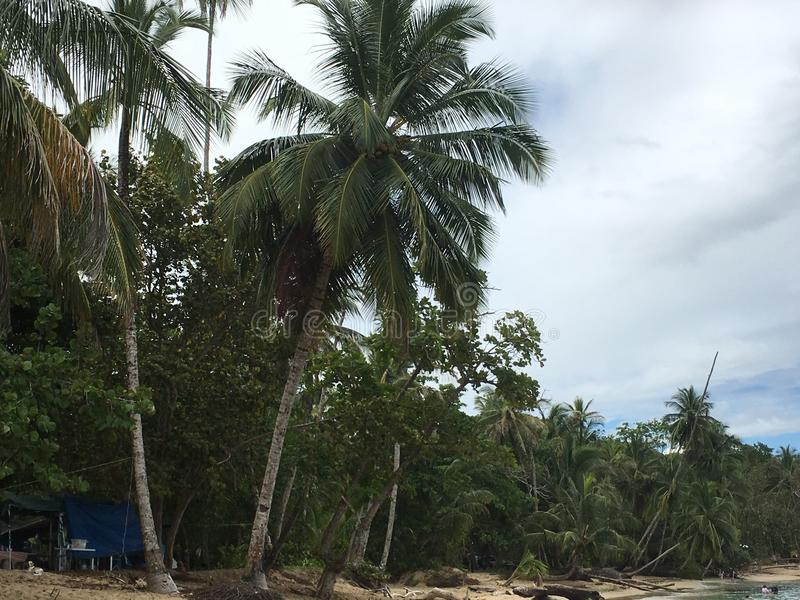 Die feinen Karibischen Meere lizenzfreies stockbild