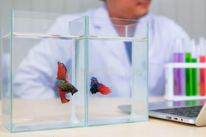 Die Fischbisse, die durch wissenschaftliche Experimente verursacht werden, entwickeln Belastungen lizenzfreies stockfoto