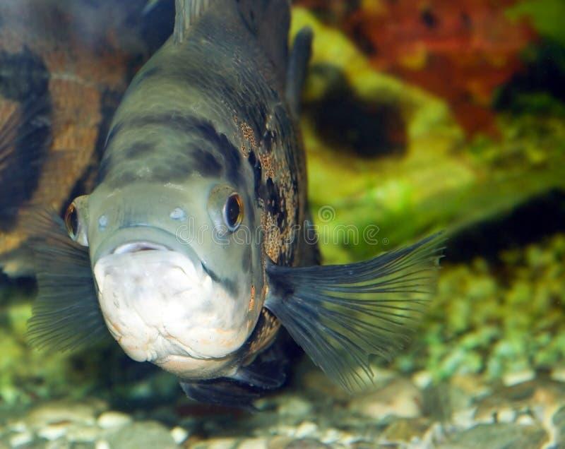 Die Fische stockfotos