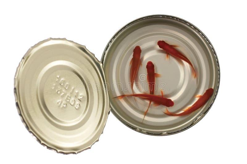 Die Fische, die in geöffnet können lebendig sind lizenzfreies stockfoto