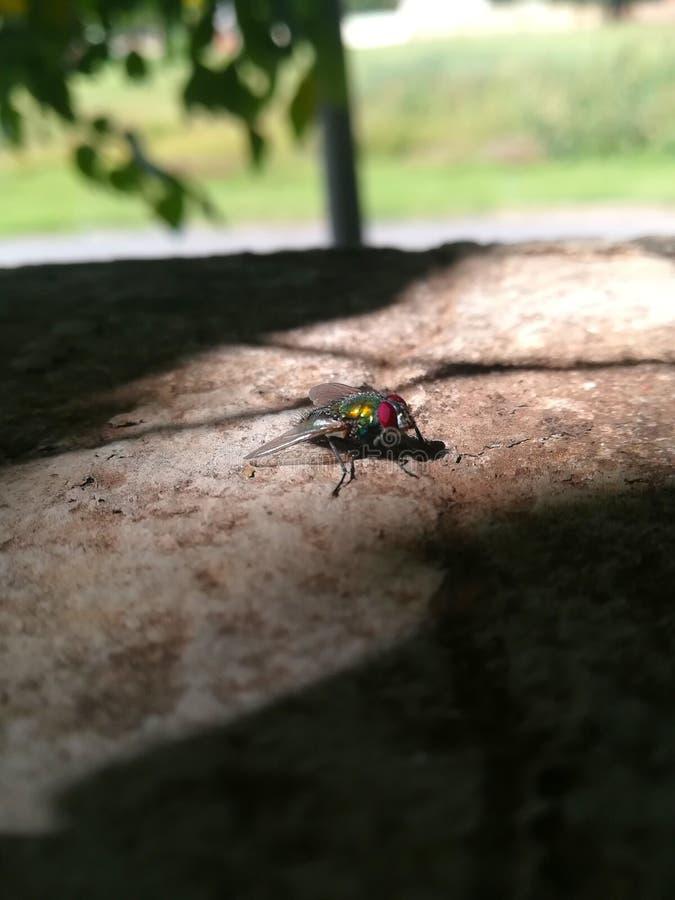 Die Fliege lizenzfreie stockbilder