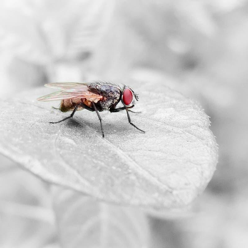 Die Fliege lizenzfreies stockfoto