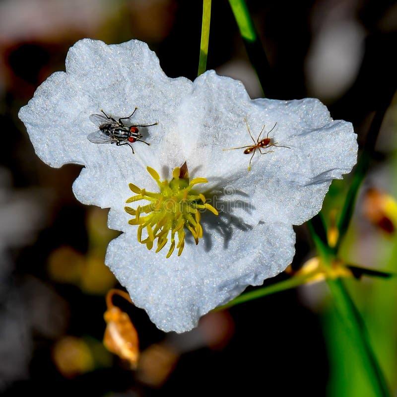 Die Fliege und die Ameise stockfotos