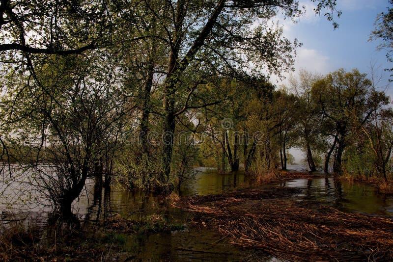 Download Die Flut auf dem Irtysch stockfoto. Bild von braun, streuung - 106802796
