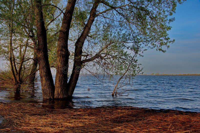 Download Die Flut auf dem Irtysch stockbild. Bild von streuung - 106803019