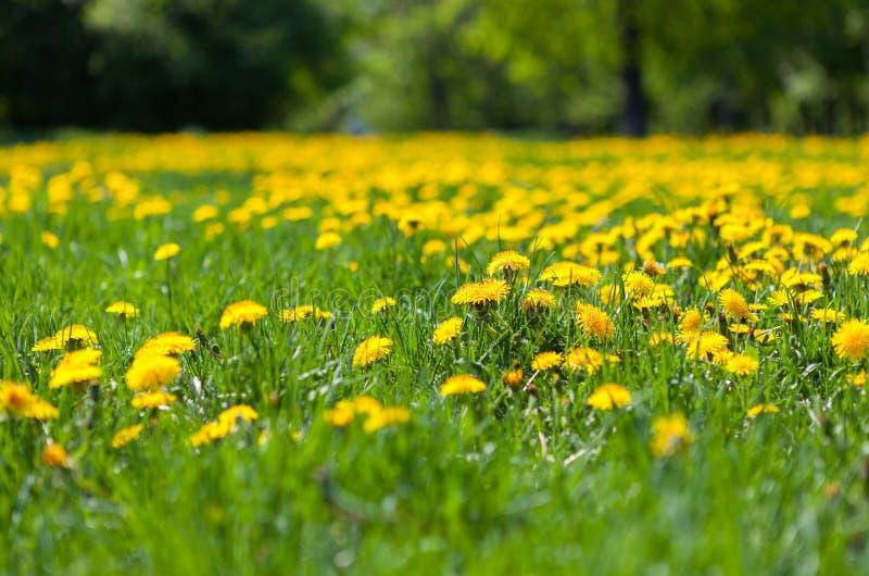 Die Frühlingswiese stockbild