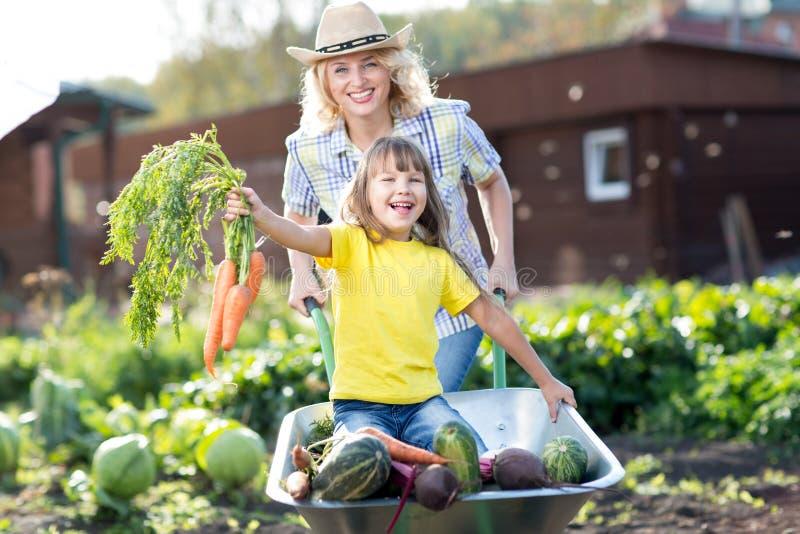 Die Frau, die ihre Kindertochter in einer Schubkarre drückt, füllte Gemüse im Garten stockbild
