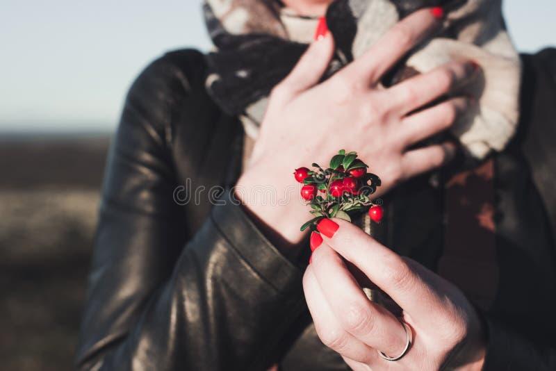 Die Frau mit hellen Nägeln hält einen Blumenstrauß von roten Beeren der Preiselbeere stockfotos