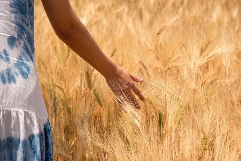 Die Frauen gehen in Gerstenbauernhöfe und berühren ihre Hände mit Gerste lizenzfreie stockfotos