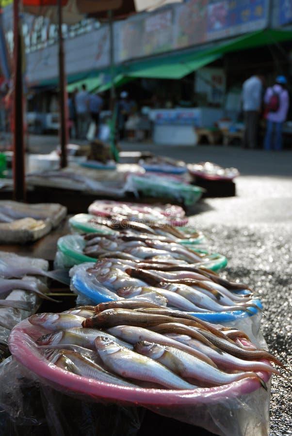 Die frischen Fische. stockbild